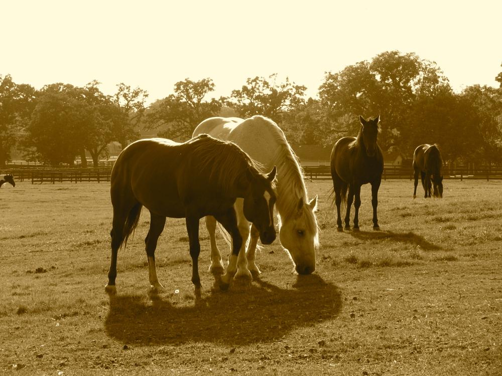 Photo in Animal #horses #mchenry