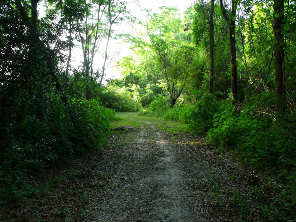 Photo in Landscape #woods #paths #trees
