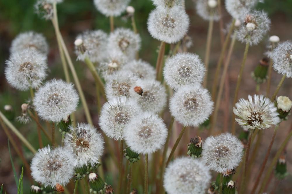 Photo in Landscape #macro #weeds #group