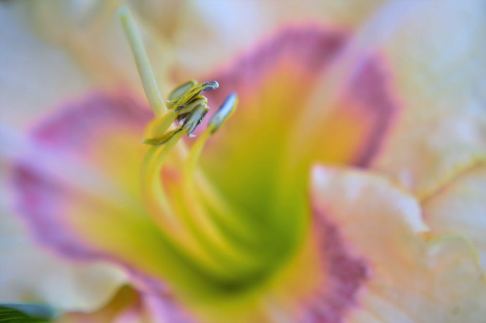 Photo in Macro #macro #flower #art