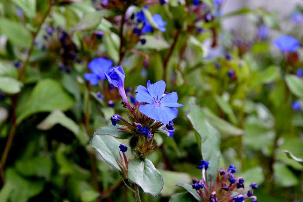 Photo in Macro #nature #garden #flower #summer