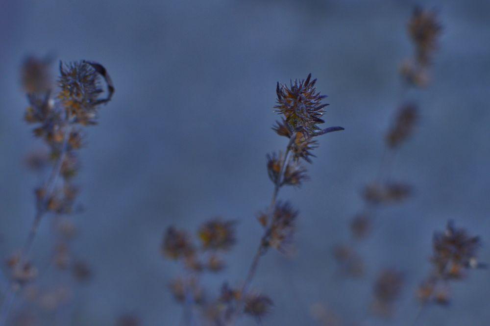 Photo in Nature #garden #winter #spices