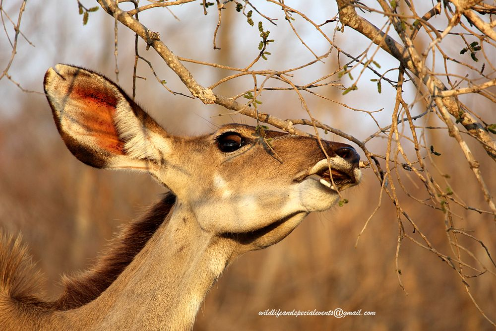 Photo in Animal #travel #wildlife #animal #nature