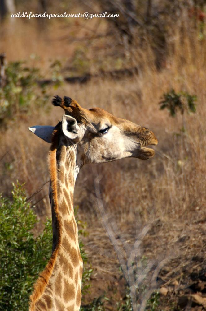 Photo in Animal #nature #africa #photo