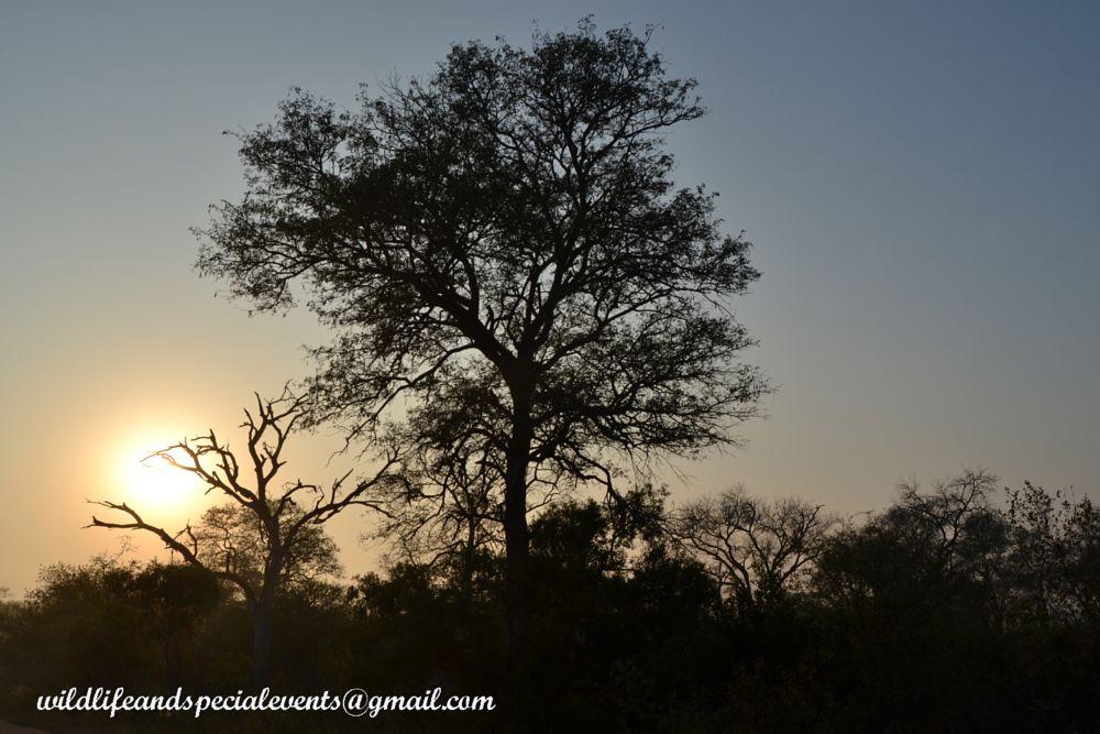 Photo in Landscape #travel #krugerpark #nature #africa