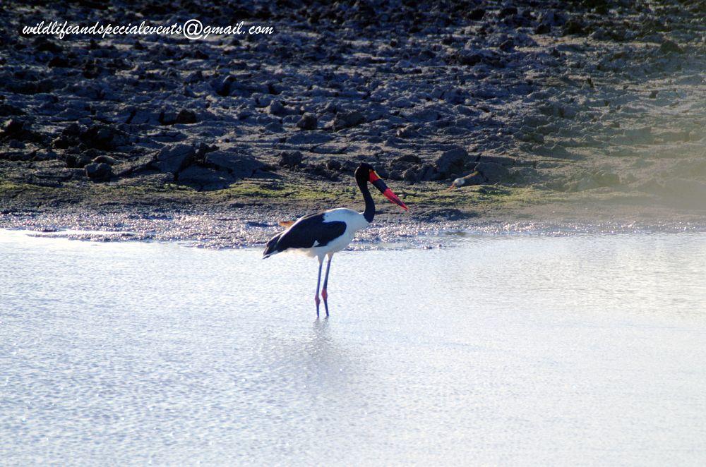 Photo in Animal #travel #birding #wildlife #nature