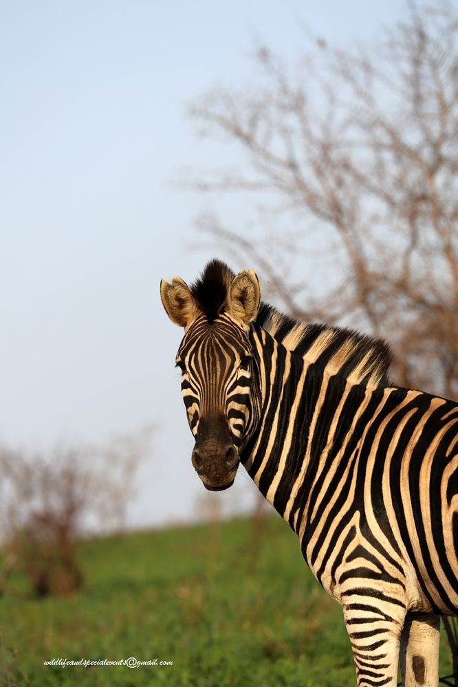 Photo in Animal #nature #travel #random