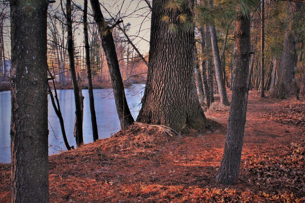 Photo in Landscape #nature #pond #water #landscape