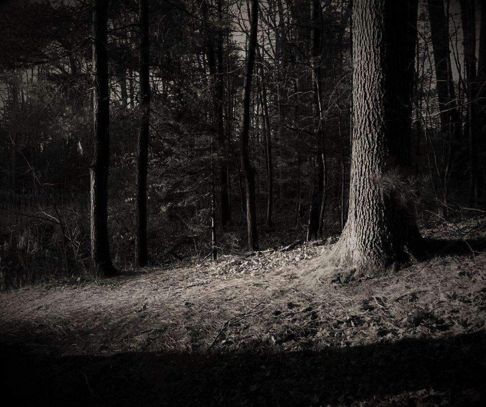 Photo in Landscape #landscape #nature #tree #forest