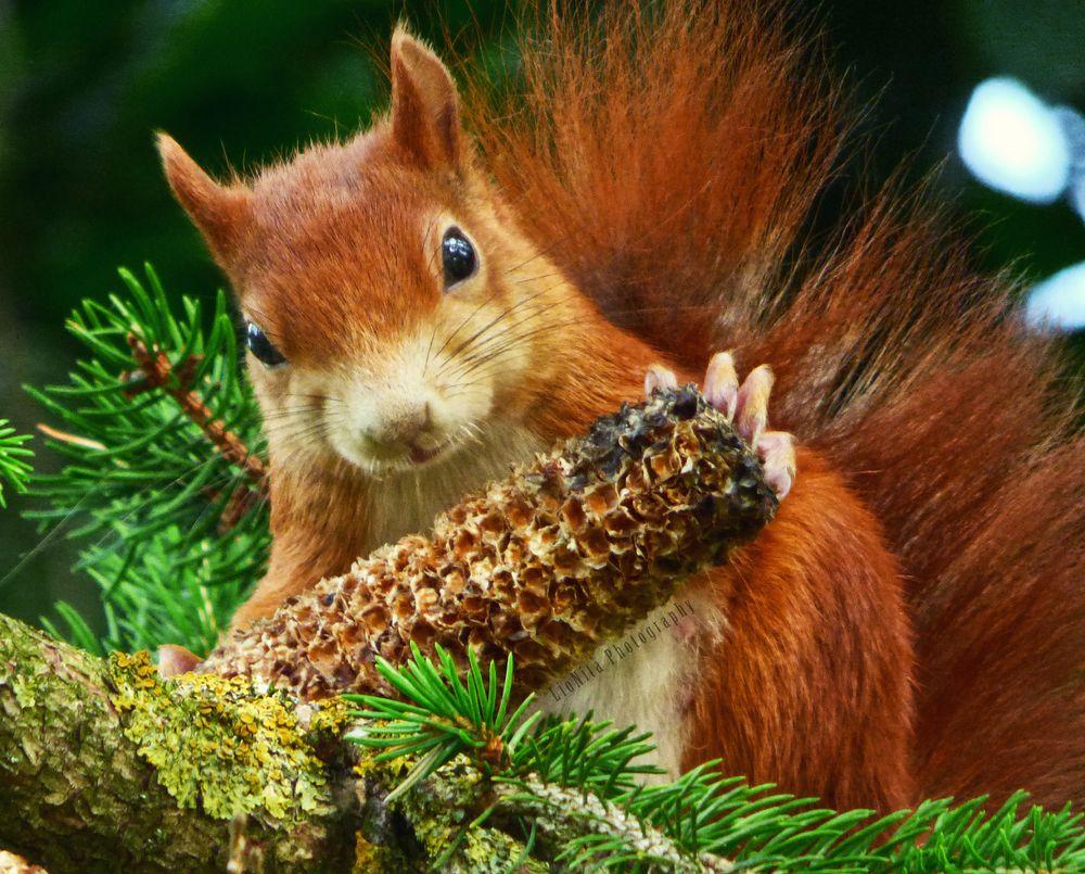 Photo in Animal #wildlife animal