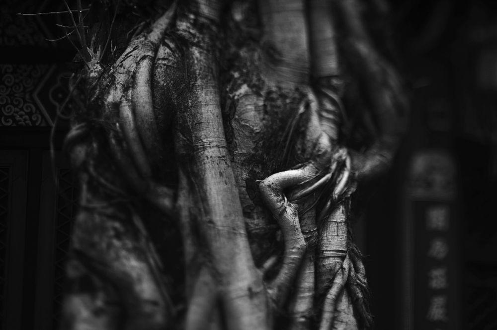 Photo in Black and White #b&w #black and white #tree #plant #wong tai sin #wong tai sin temple #temple #taoist #hongkong