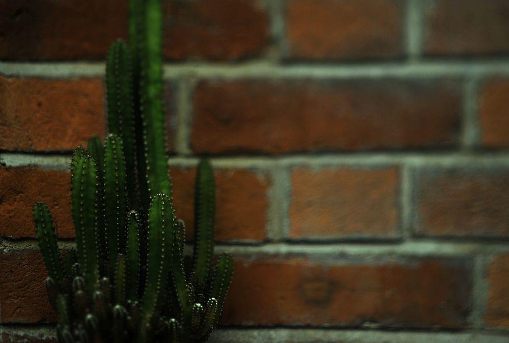 Photo in Abstract #bricks #wall #brick wall #cactus #old #hongkong