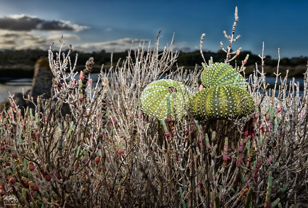 Photo in Nature #sea urchins #sea #seascape #landscape #river #urbex #urban #sardinia #italy