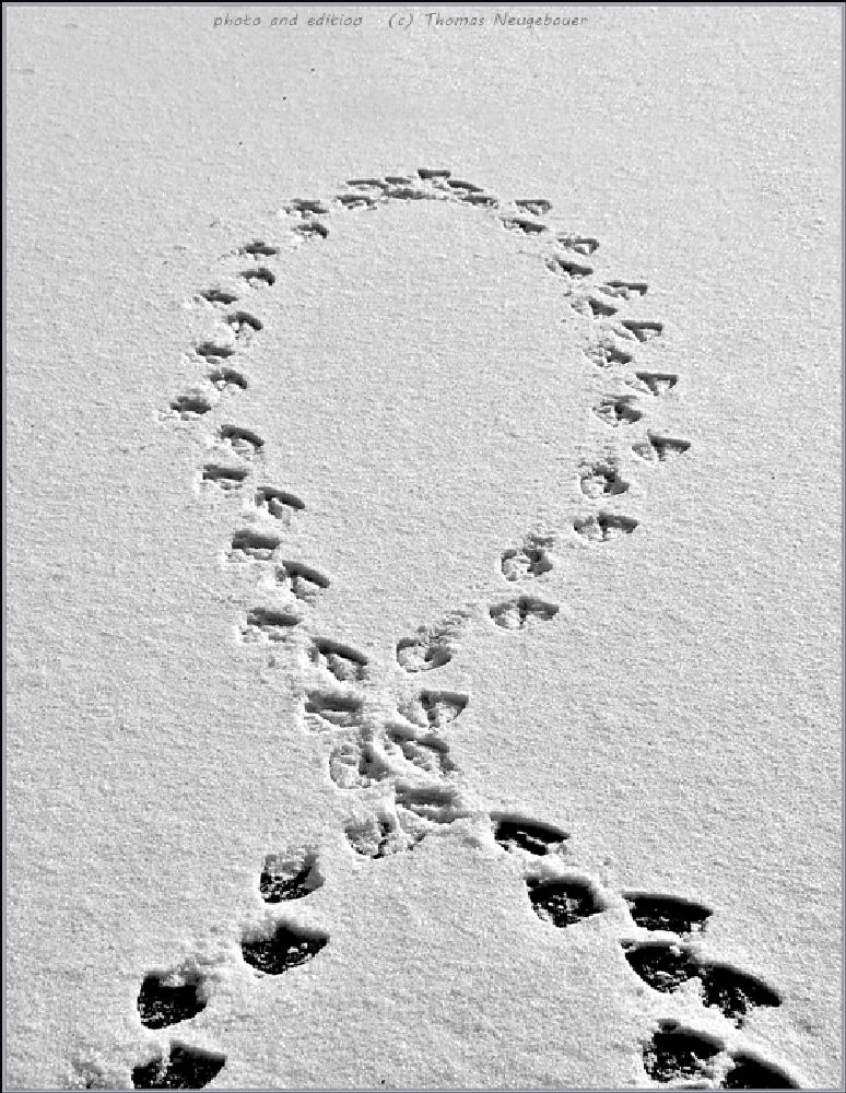 Photo in Black and White #(c) thomas neugebauer #traces #steps #footprints #black and white #random #all categories #youpic #inspiring #inspiration #random #all categories #black and white