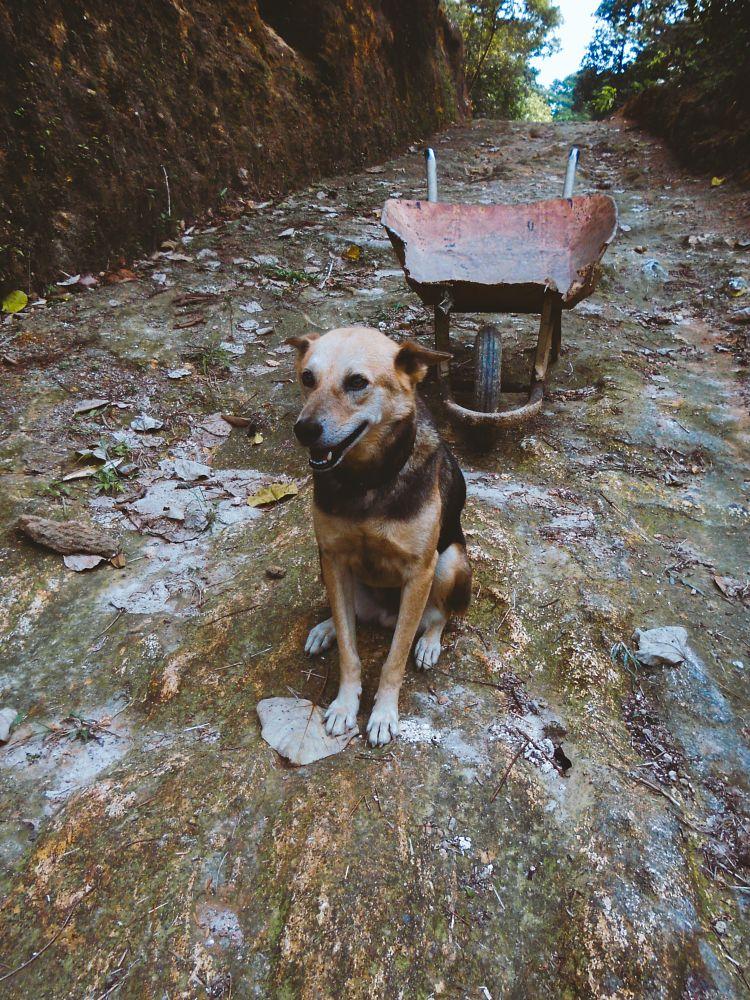Photo in Animal #pet #dog #partner