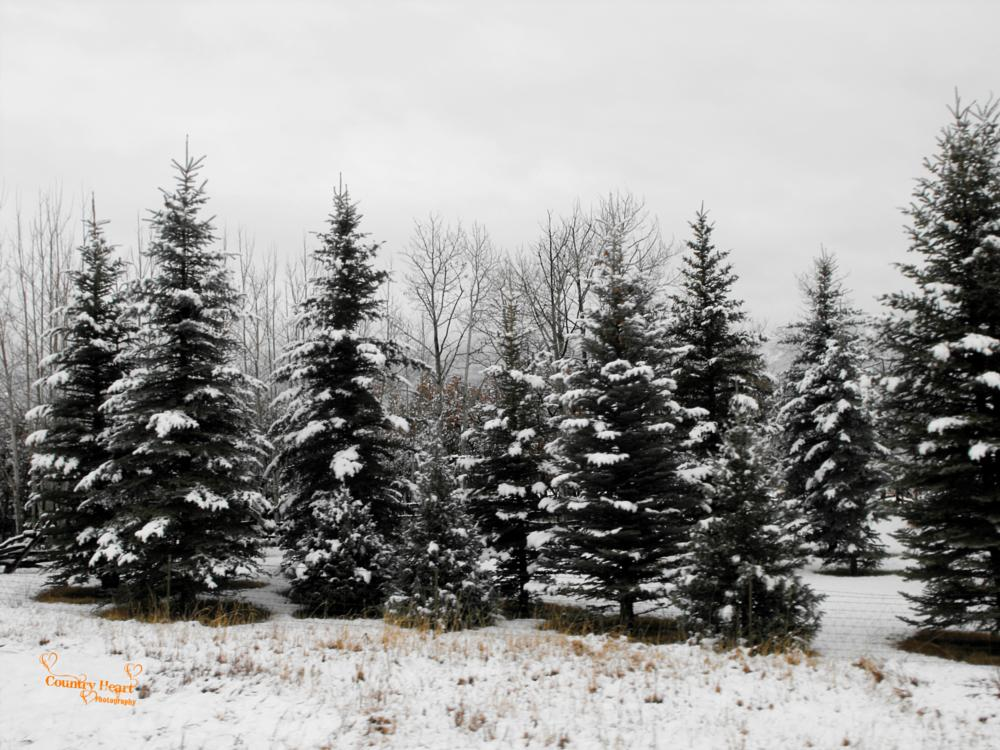 Photo in Landscape #winter #landscape #snow