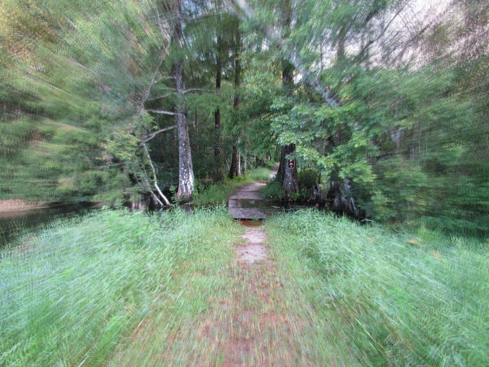 Photo in Nature #trail #focus #c.r.e.w. #bird rookery swamp #everglades #florida #igotone.com