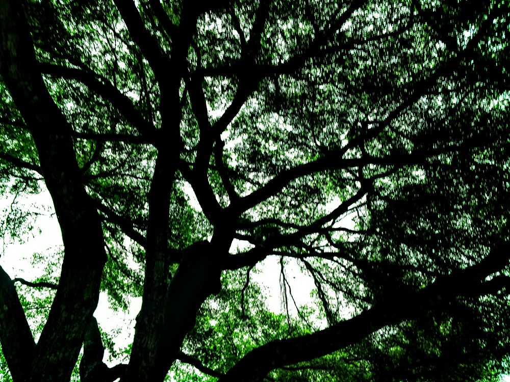 Photo in Nature #oak #tree #inside #bonita springs #florida #igotone.com