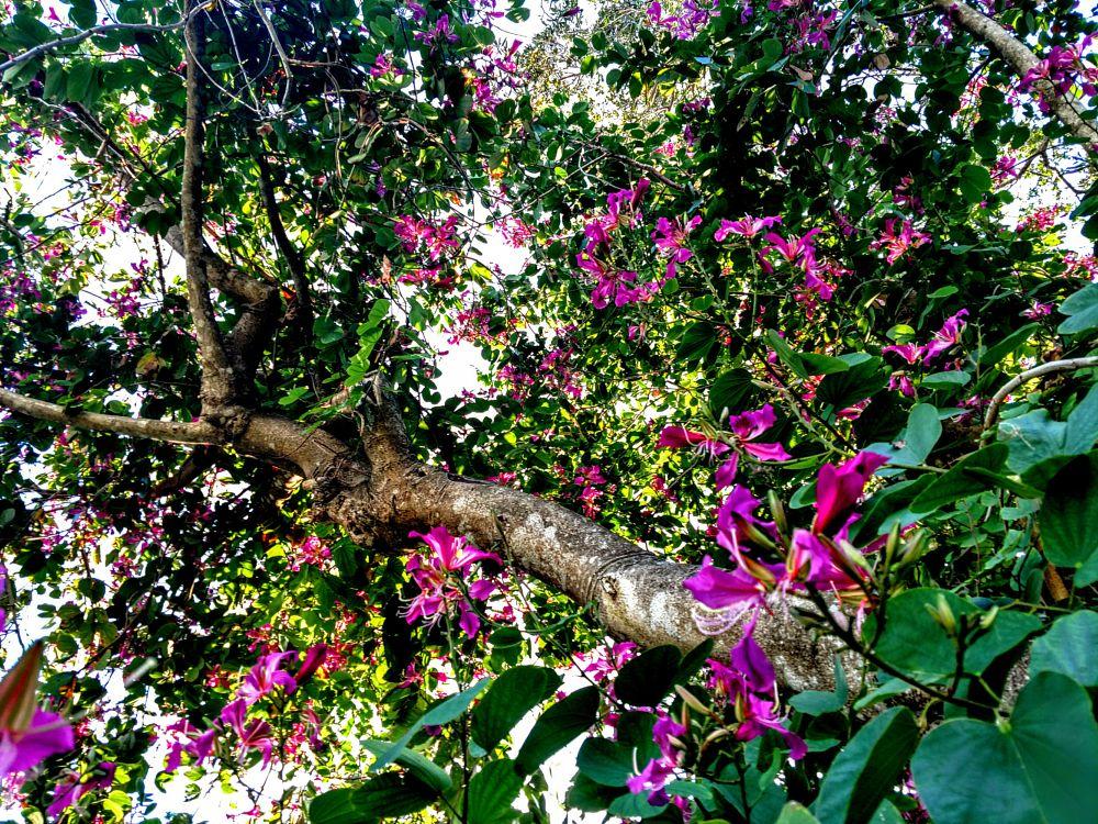 Photo in Nature #hong kong #orchid #tree #bonita springs #florida #igotone.com