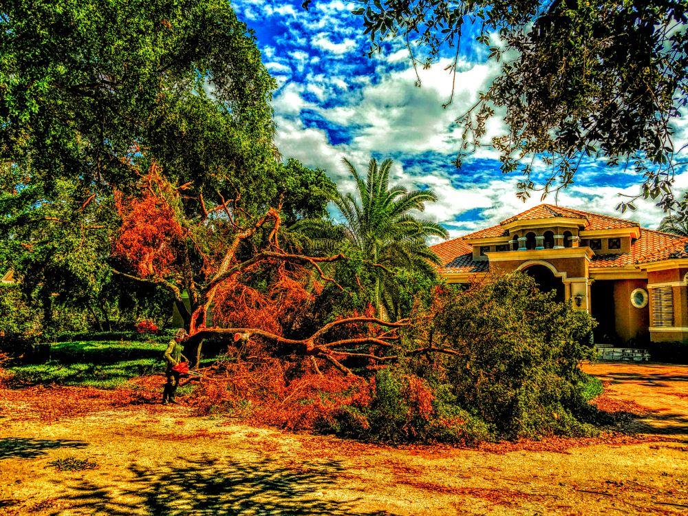 Photo in Nature #trees #destroyed #neverending #work #bonita springs #florida #hurricane irma #movie #igotone.com