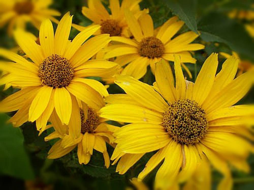 Photo in Random #flower #garden #yellow #green