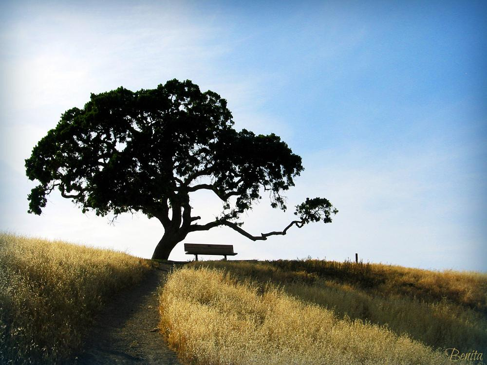 Photo in Nature #bench #hill #livermore #california #usa #grass #hillside #blue #sky #golden #oak #tree #lake #lake del valle #nature #outdoors #west coast