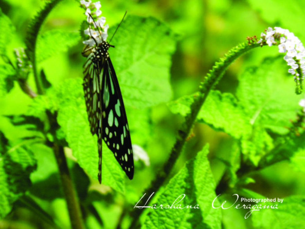 Photo in Nature #butterfly #nature #animals #life