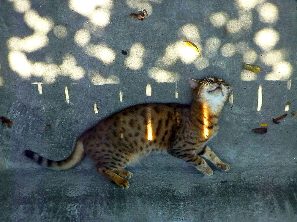 Photo in Animal #cat #sun #shadow