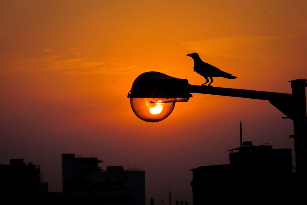 Photo in Animal #sun #sunset #bird #city #nature