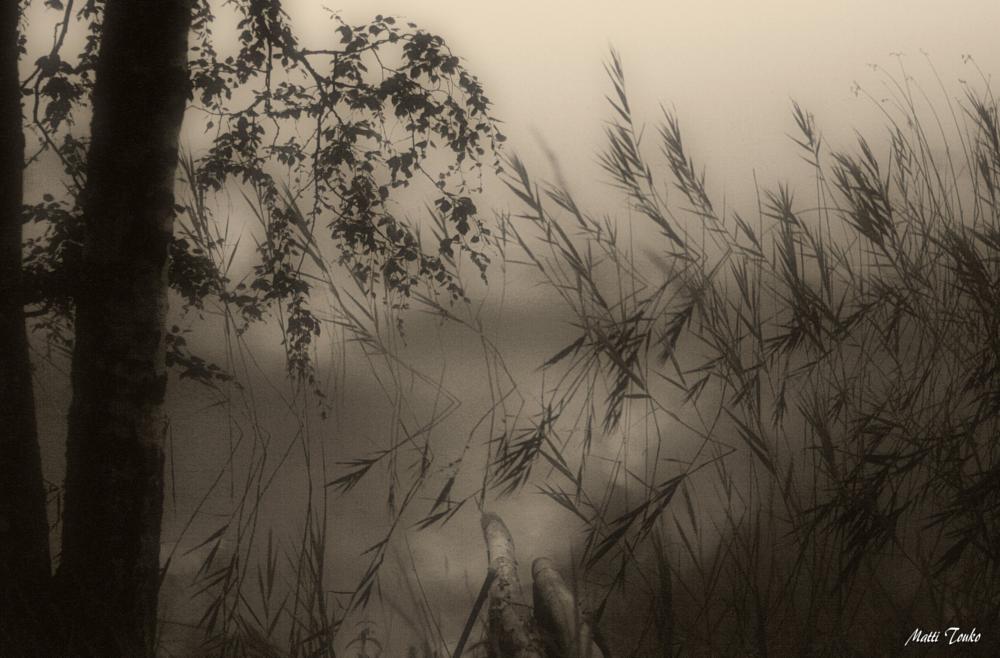 Photo in Fine Art #nature #luonto #art #taide