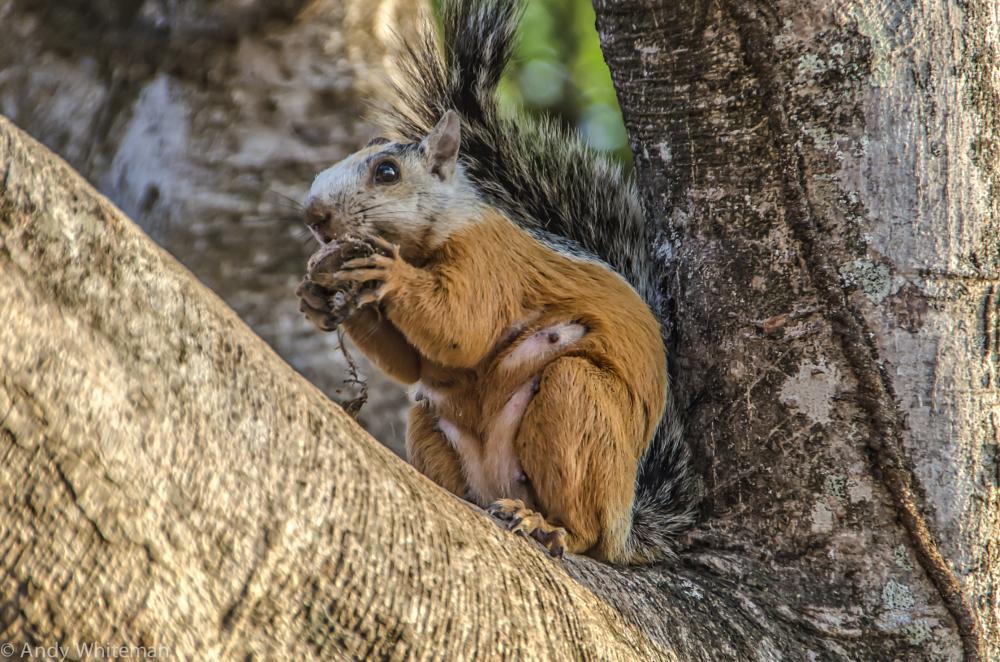Photo in Nature #smilindogtamarindo #squirrel #cute