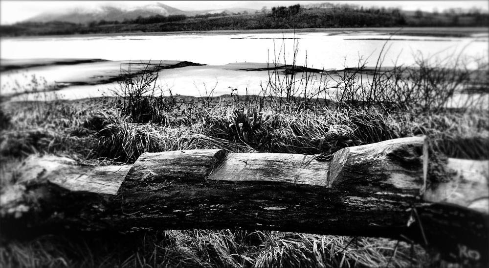 Photo in Random #log #bench #seat