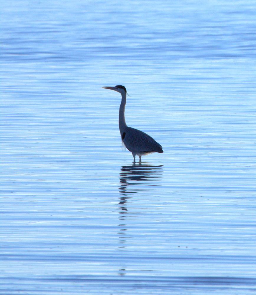 Photo in Animal #kusbird