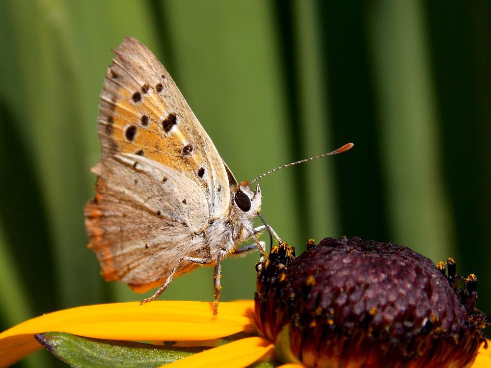 Photo in Random #butterfly #nature #flower #petals #makro