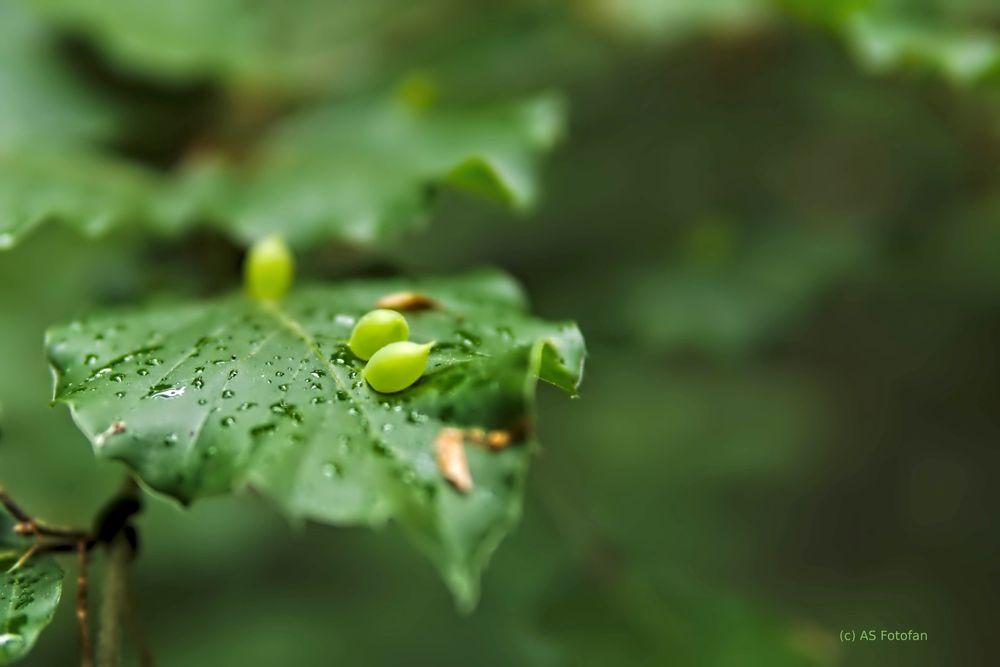 Photo in Nature #natur #grün #leise #wachstum #samen #regentropfen #saubere luft