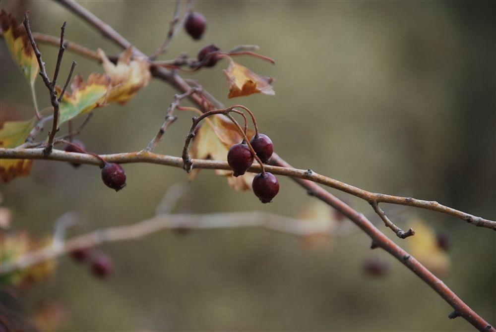 Photo in Random #hösten
