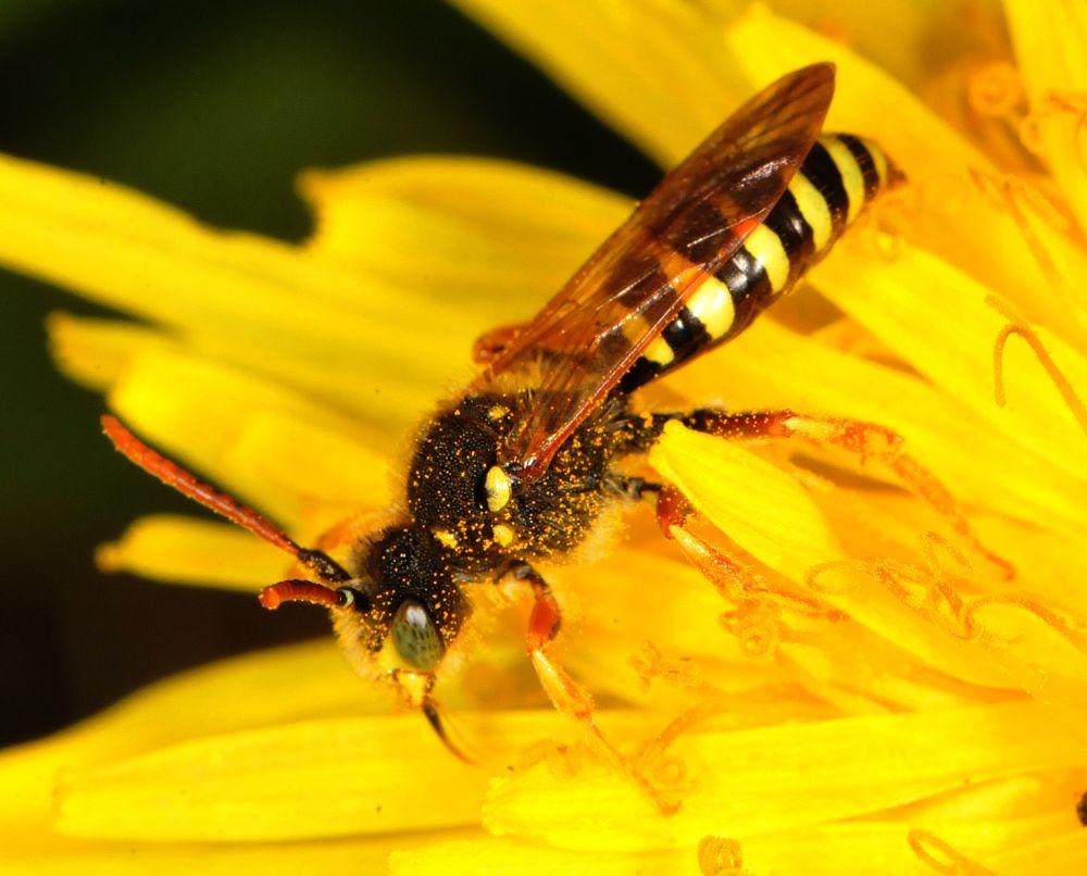 Photo in Macro #wasp #macro #nature