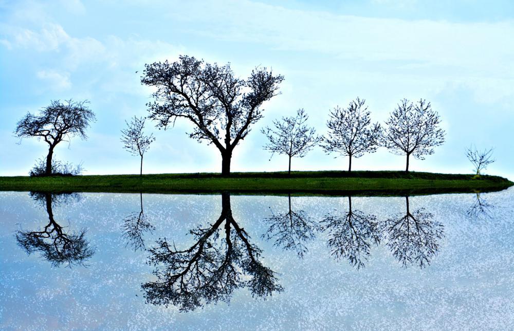 Photo in Abstract #spielelungen #bäume #am wasser
