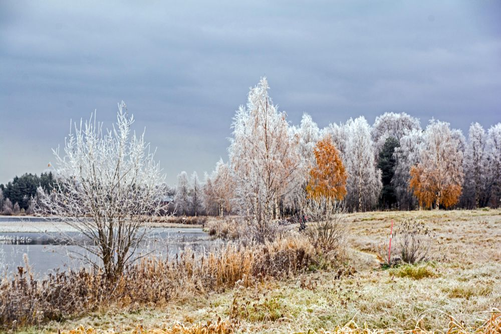 Photo in Landscape #cold #morning