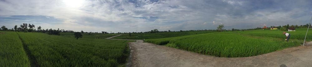 Photo in Nature #sun #nature #gogreen #sky #bali #road