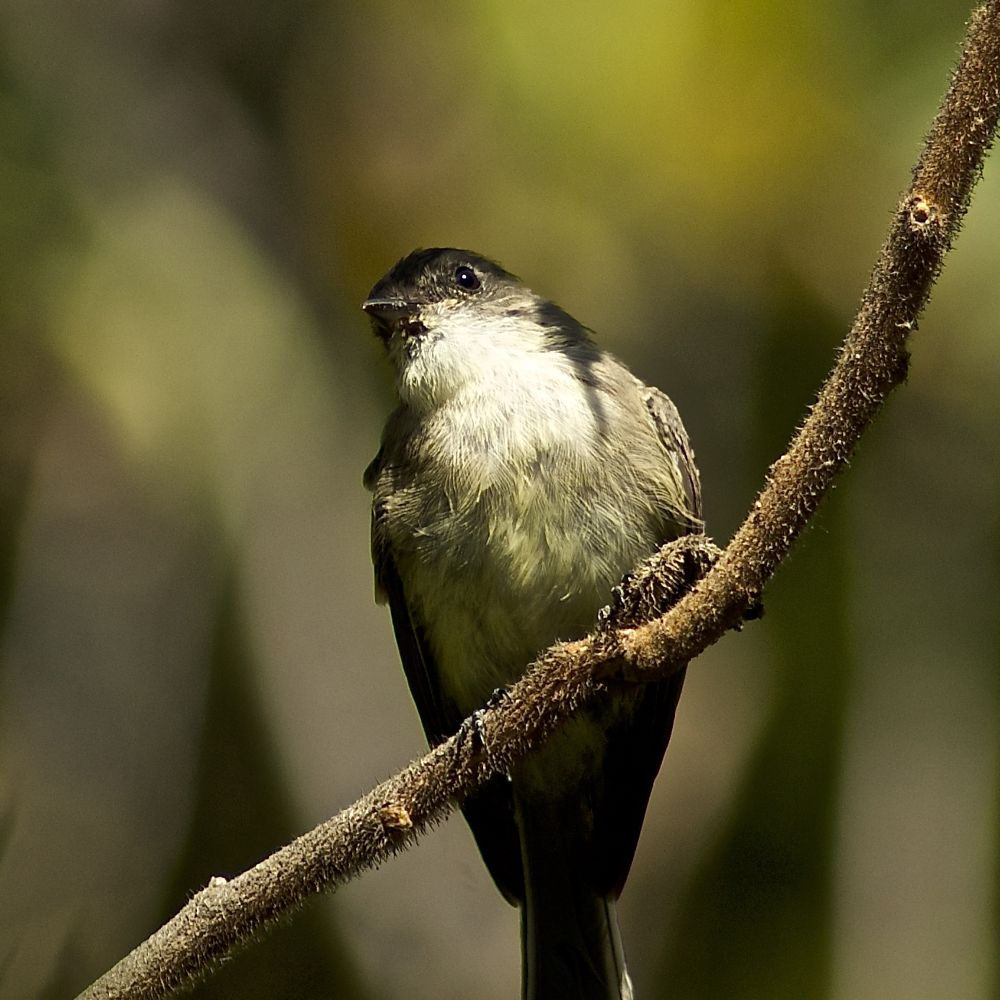 Photo in Animal #bird #phoebe #mill creek park #ohio