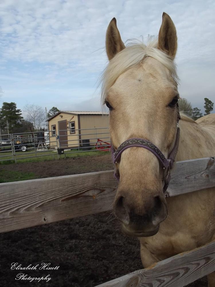 Photo in Animal #horse #equine #animals #ehphotography