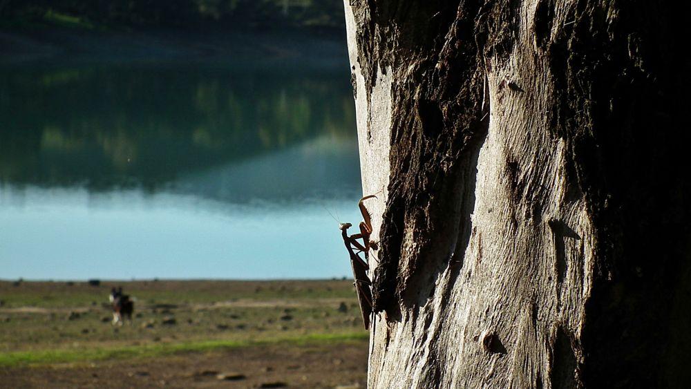 Photo in Rural #mantis #tree
