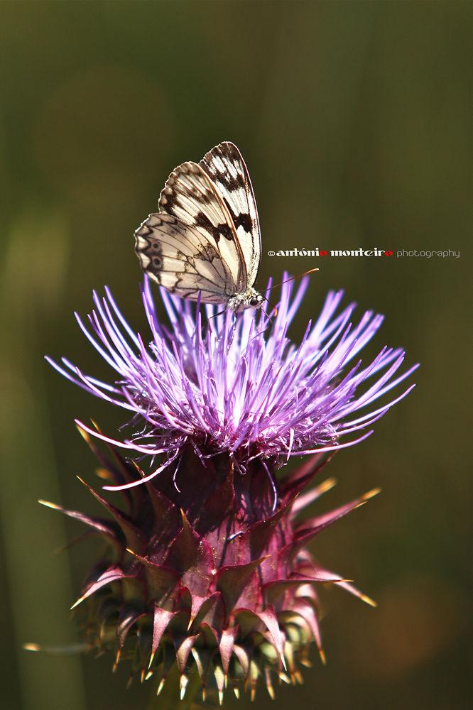 Photo in Random #butterfly #borboleta