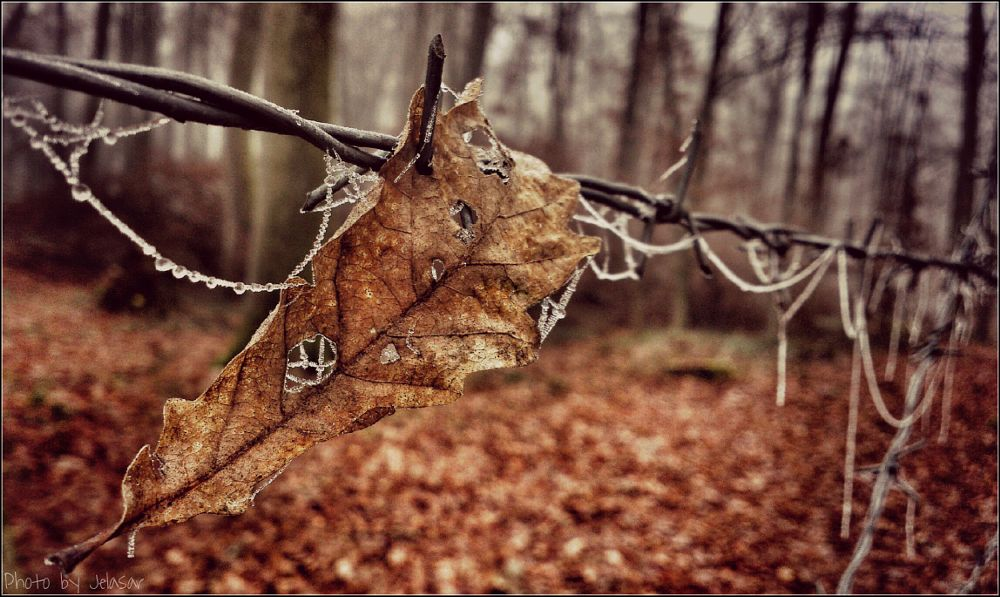 Photo in Nature #autumn #leaf #forest #wire