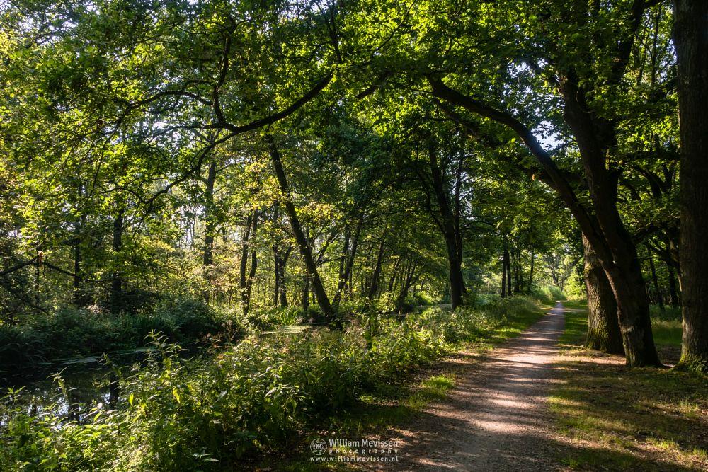 Photo in Nature #griendtsveen #deurneschepeel #water #mariapeel #trees #kaasweg #nature #limburg #helenaveen #depeel #peel #helenavaart #netherlands #path #turf #dirt #road #noord-limburg
