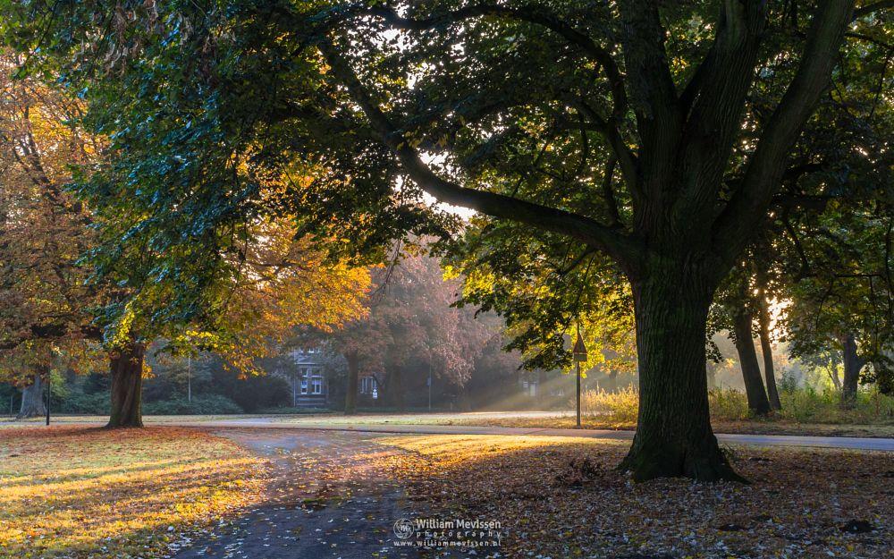Photo in Nature #trees #forest #limburg #noord-limburg #venray #annaterrein #nature #green #autumn #path #mood #light
