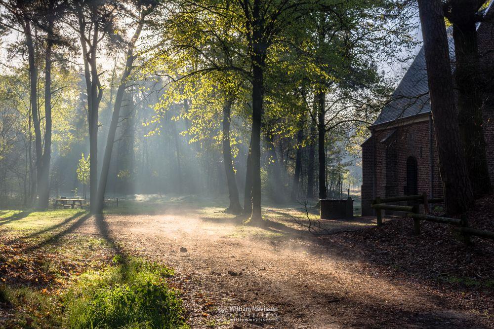 Photo in Nature #geijsteren #venray #oostrum #landgoed geijsteren #limburg #noord-limburg #nature #forest #geysteren #spring #trees #path #mood #mist #light #rays #chapel #frost #willibrorduskapel