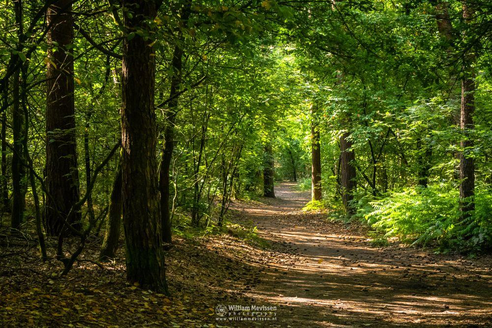 Photo in Nature #odapark #limburg #noord-limburg #venray #nature #forest #path #trees #spring #park #vlakwater