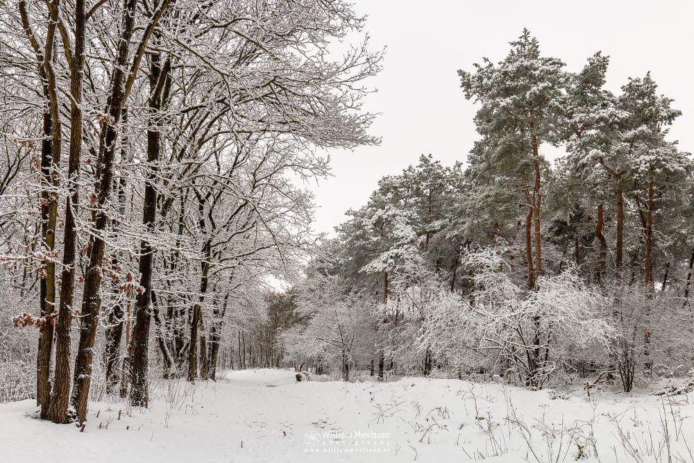 Photo in Nature #boshuizerbergen #limburg #nature #boschhuizerbergen #woods #forest #snow #winter #winterlandscape #winterscape #trees #netherlands #venray #noord-limburg
